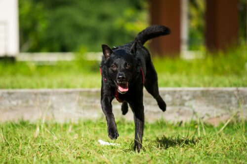 Action Photography for Pets in Singapore
